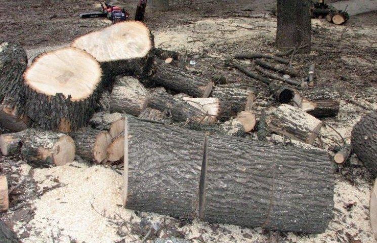 У Миколаєві комунальники за два роки пригадали, що їх просили спиляти дерева
