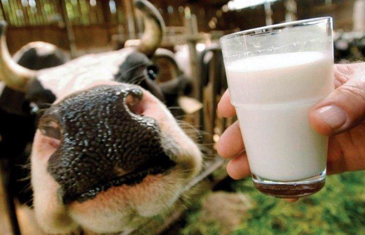 На Миколаївщині на 7% скоротилось виробництво молочних продуктів