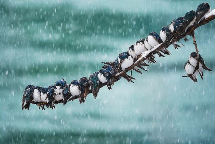 Чому 4 лютого треба брати приклад з птах…