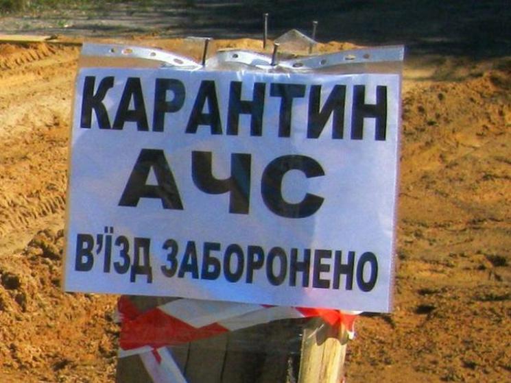 Сразу в 6-ти областях государства Украины вспышка африканской чумы свиней