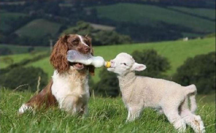 20 смішних і зворушливих проявів доброти тварин, які змусять посміхнутися