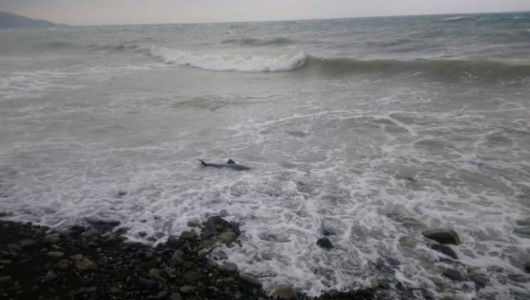 В Новороссийске на пляже нашли мертвого…