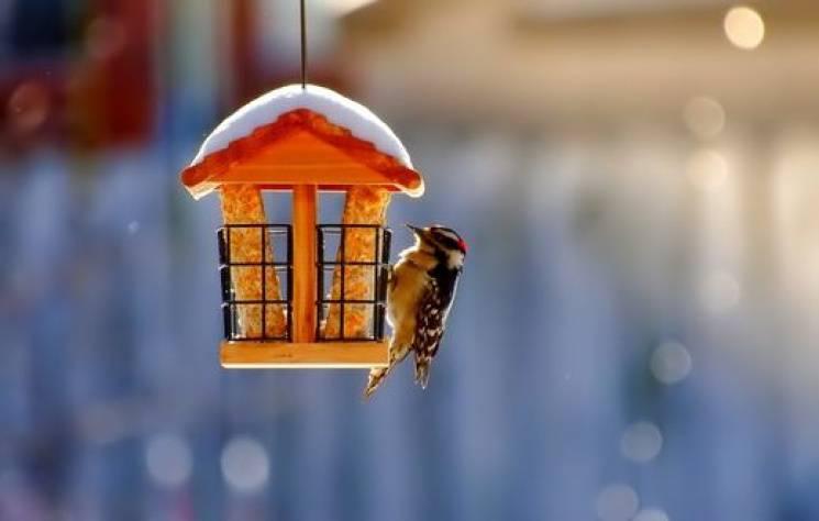 Перелом зими: Чого не можна робити у день блаженної Ксенії