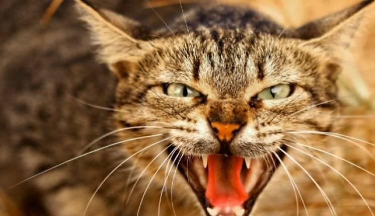 ВХарьковской области введен карантин из-за нападений бешеного кота