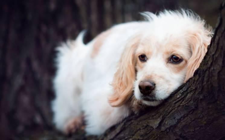 У Сумах шукають шкуродера, який ставить капкани для собак
