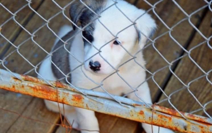 У Нікополі зоозахисники б'ють на сполох через чуму у притулку для безпритульних собак