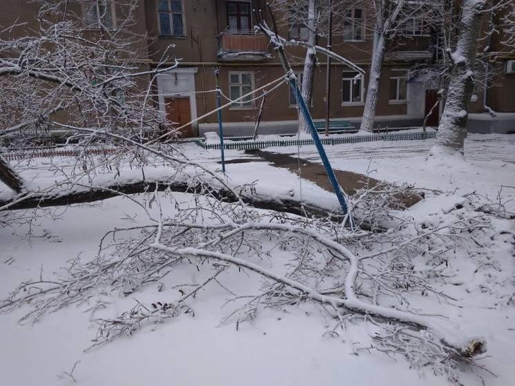 Кришталевий і небезпечний: Як на запорізькому курорті ламаються та падають зледеніли дерева (ФОТО)