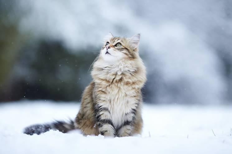 На Київ суне весняне потепління, але підсипатиме сніжок