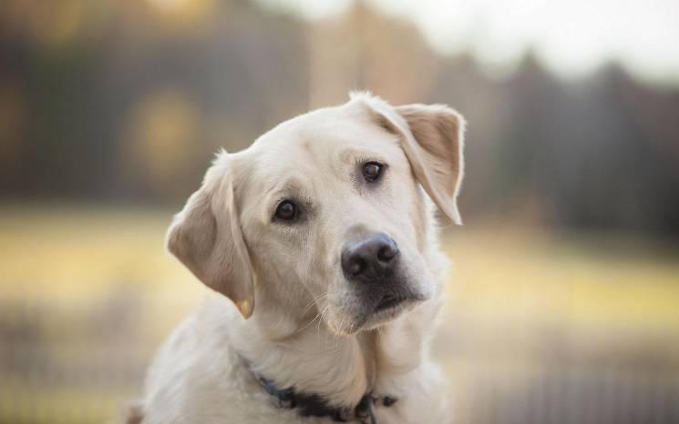 Бережіть собак: На столичних вулицях догхантери розкидають отруту (АДРЕСИ)