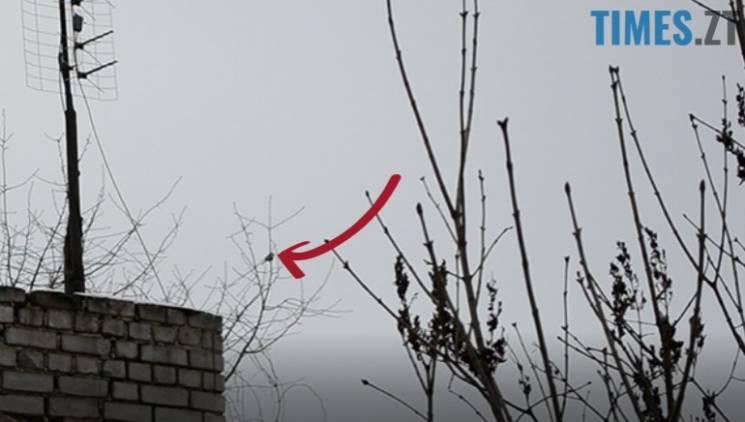 У Житомирі по-весняному заспівала пташка (ВІДЕО)