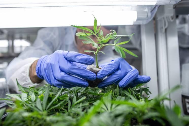 Легалайз марихуани: Чому ідея Супрун та…