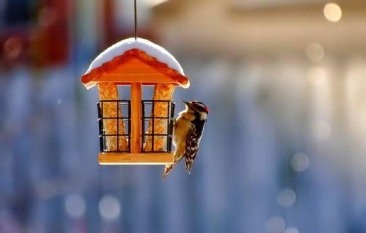 Перелом зими: Чого не можна робити у ден…