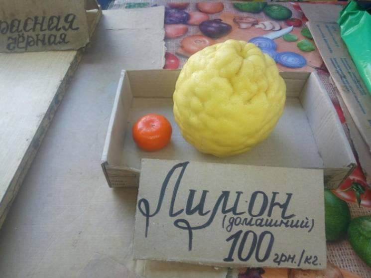 На Запоріжжі виростили лимон-гігант (ФОТО)