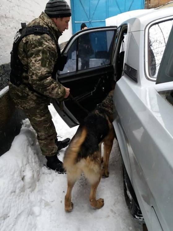 У Кропивницькому СІЗО тренували службових собак (ФОТО)