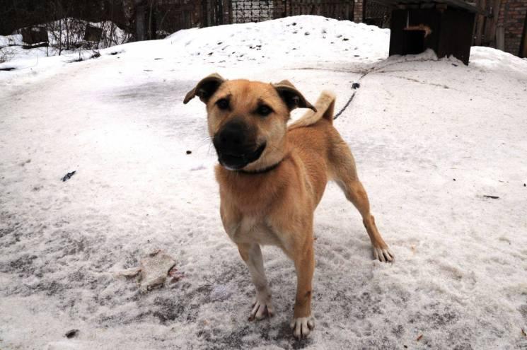 У Кропивницькому собаку з притулку прихистив заступник очільника управління ДСНС (ФОТО)