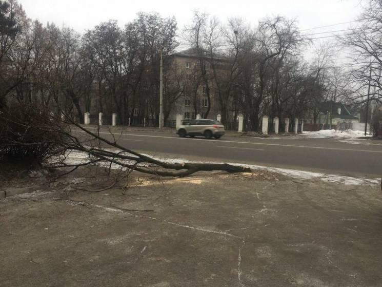 У Дніпрі повалене дерево полишили посеред тротуару (ФОТО)