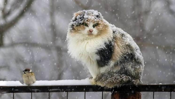 Українців попереджають про погіршення погоди