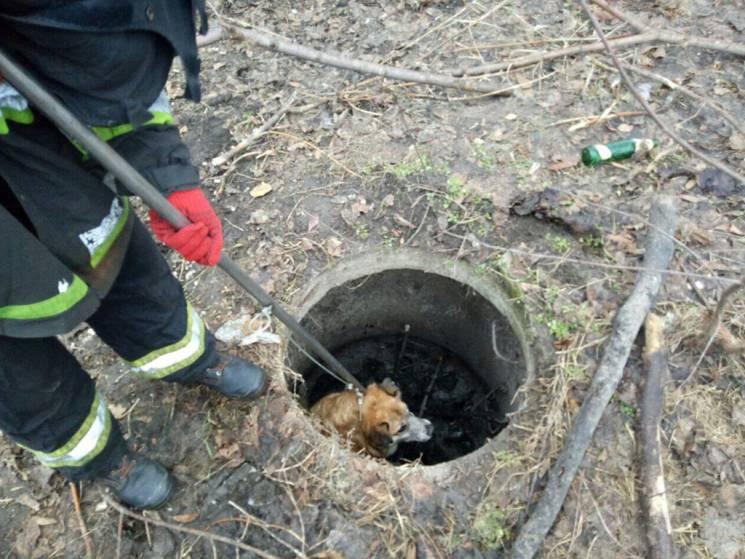 У Дніпрі врятували собаку, що провалився…