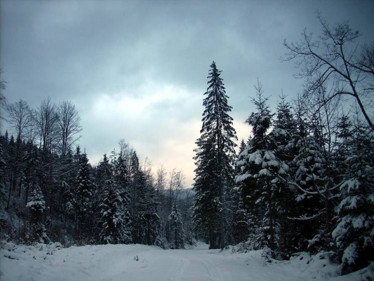 Перед весною: Які по-справжньому зимові…