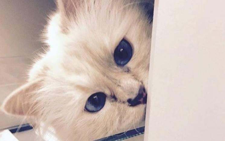 Кошка Лагерфельда надела траур и заговор…