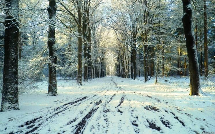 Чому 23 лютого не варто гуляти у лісі і…