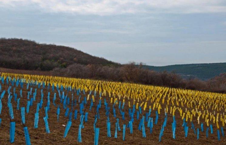 ФОТО ДНЯ: На полях Крыма всходит «бандеровщина»