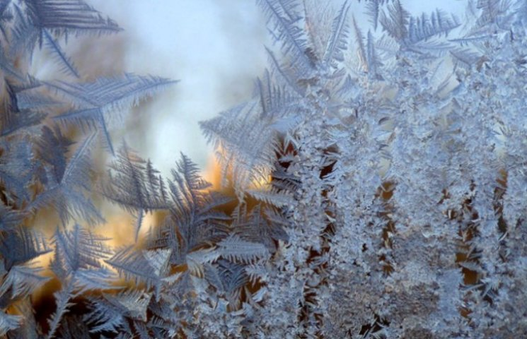 Закарпаття: прогноз погоди на 1 січня - прислухайтесь до птахів