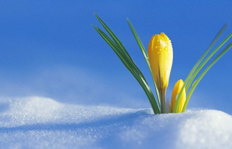 Зима спізнилась в Київ на 33 дні: очікуємо на ранню весну