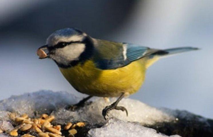 Закарпаття: прогноз погоди на 8 січня - спостерігайте за сонцем та птахами