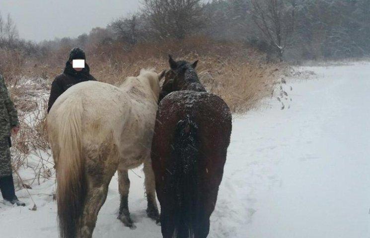 На Сумщині контрабандист намагався переправити до Росії двох коней
