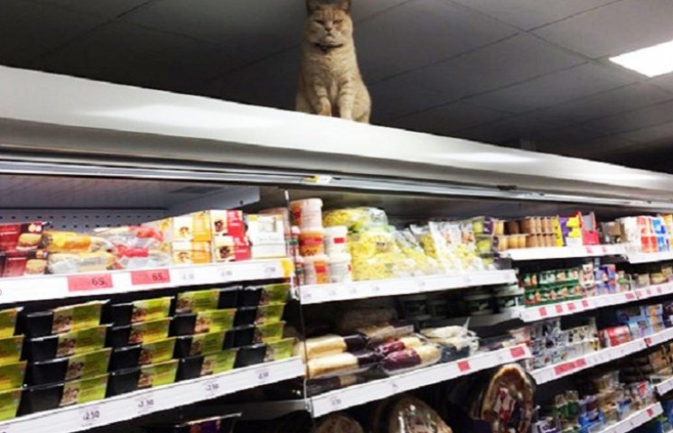 Як нахабний кіт вдає з себе власника супермаркета