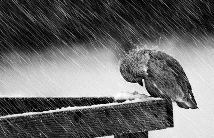 У найближчі дні у Києві прогнозують мокрий сніг, ожеледицю та шквальний вітер