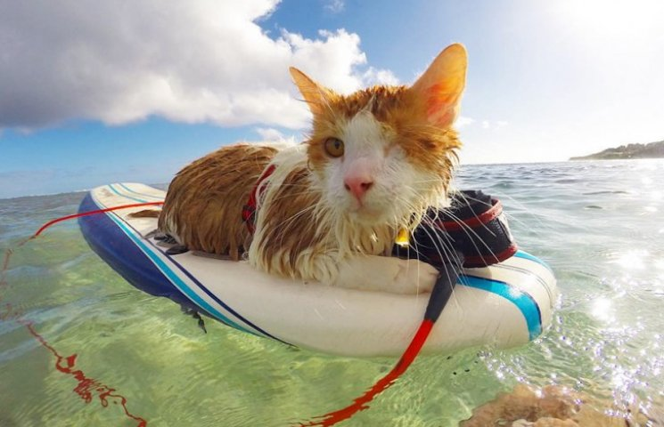 Як одноокий кіт-серфер підкорював хвилі на Гаваях