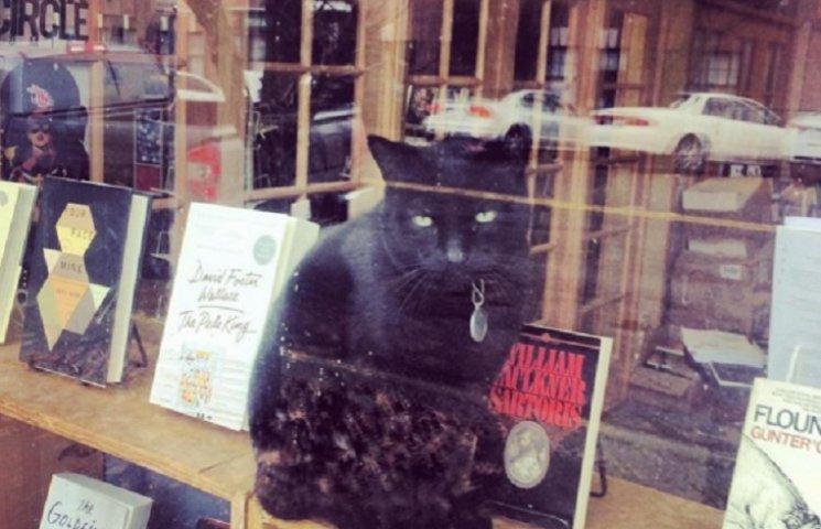 Коти у книгарнях: навіть котики читають, а ти?