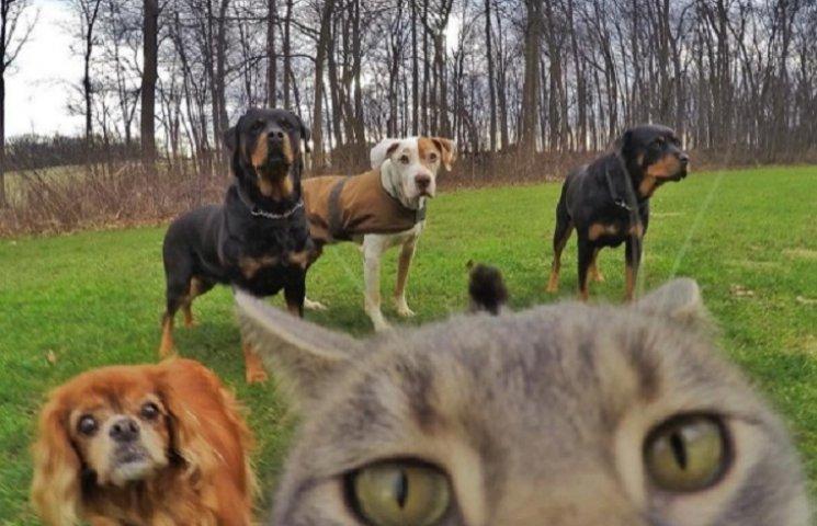 Інтернет підірвав кіт, який робить селфі краще, ніж більшість людей