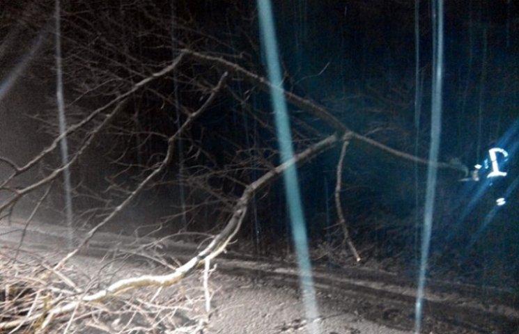 На Закарпатті негода повалила на дороги дерева