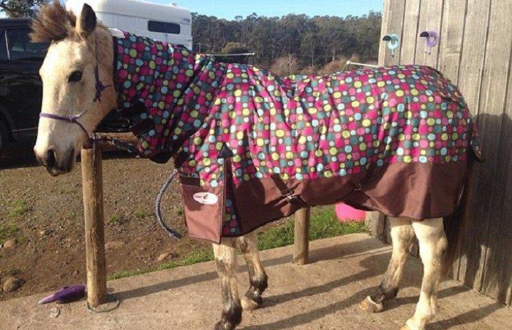 В Австралии жестоко изнасиловали коня