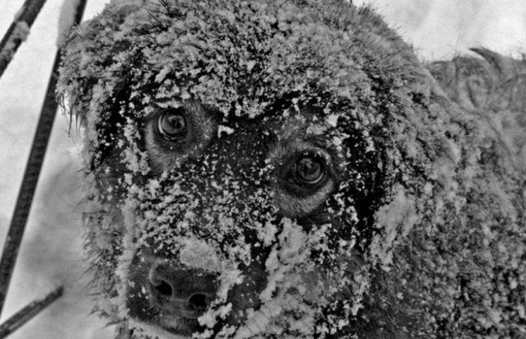 У Вінниці з початку року отруїли 16 собак