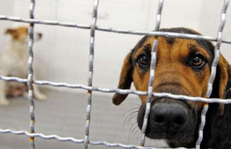 Кошти на притулок для бездомних конотопських тварин шукатимуть за кордоном