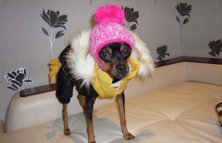 Холод собачий: ТОП-20 модных сучек