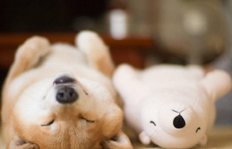 Как трогательно спит милый песик со своим плюшевым двойником