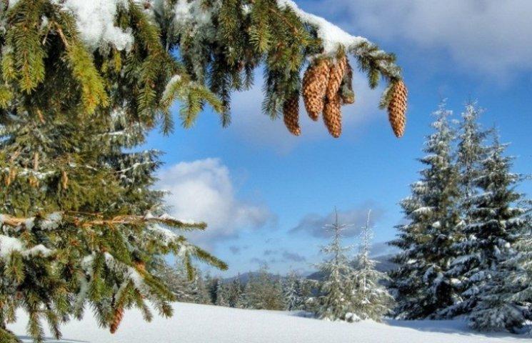 Закарпаття: прогноз погоди на 24 січня - бійтесь тепла