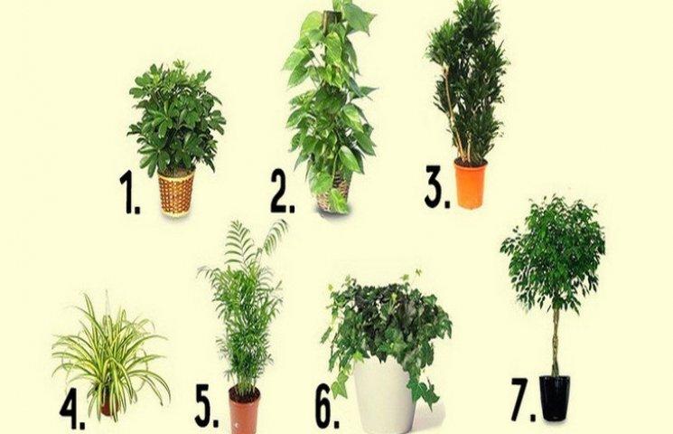 7 лучших комнатных растений для очистки…
