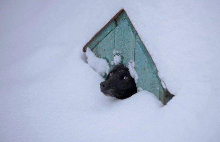 Як пес разом з будкою застряг у снігових кучугурах