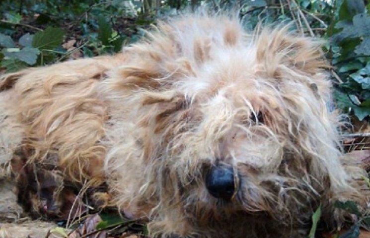 В Британии расследуют факт издевательства над собакой, которой сломали все кости