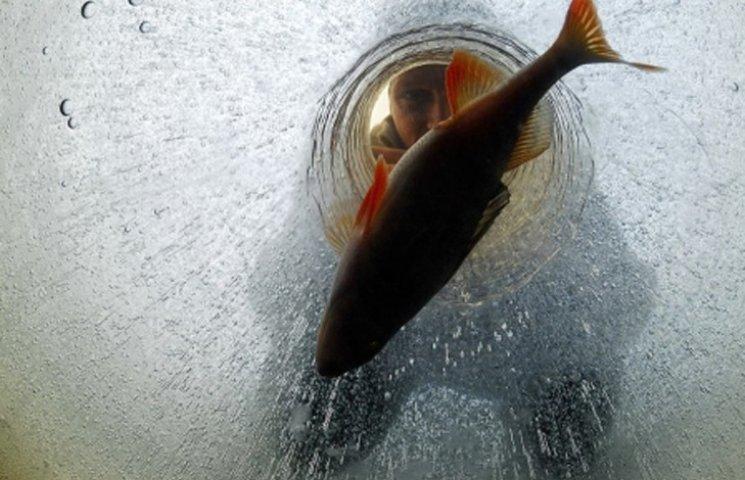 """Сумчан закликають допомогти """"перезимувати"""" рибі у водоймах"""