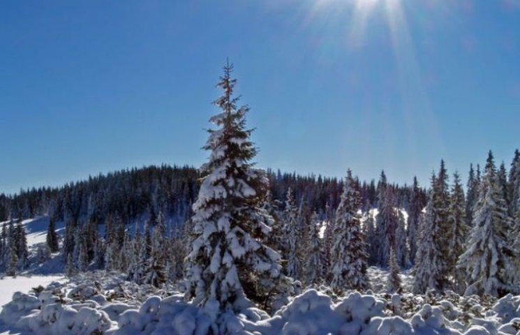 Закарпаття: прогноз погоди на 30 січня - Антонів день