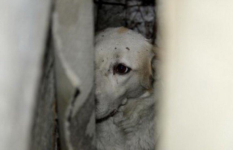 У центрі Дніпра четверо рятівників вирізали собаку з паркану