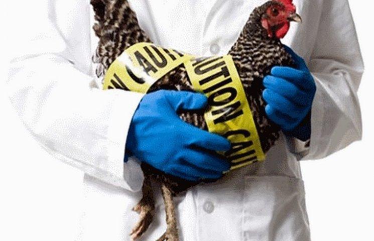 В одному з районів Одещини було зафіксовано спалах пташиного грипу