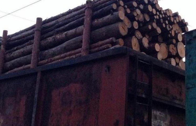На Одещині правоохоронці викрили незаконний експорт лісу (ФОТО)
